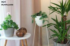 #olohuone #kookos #sisustus #kukkateline #lipasto #vihersisustus #viherkasvit #jukkapalmu #skandinaavinensisustus #skandinaavinenkoti #modernikoti #värikäskoti #sisustusinspiraatio #persoonallinenkoti #menaiset #livingroom #home #interior #decor #decoration #plants #houseplants #scandinavianinterior #scandinavianhome #interiorinspiration #modernhome #colourfulhome #colorfulhome #yuccaelephantipes #coconuts