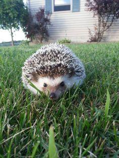 Fifi Outside Playing | Cutest Paw