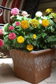 Easy DIY: Spray Paint a flower pot! Looking old or wrong color? Don't go out to buy a new pot when you can spray paint it!