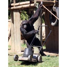 just mowing the lawn...