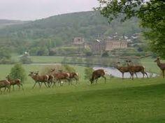 herd of deer, Chatsworth English Landscape Garden, Most Romantic, Country Life, Garden Landscaping, Camel, Deer, Romance, Horses, Park