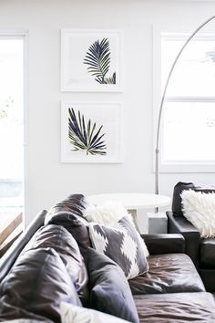 A masculine living room with a leather sofa and palm leaf photographs on the wall