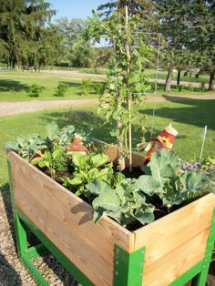 This is a 33-inch high raised garden bed for use with clients in wheelchairs.  The bed measures 2 feet by 4 feet, making it accessible on all sides.
