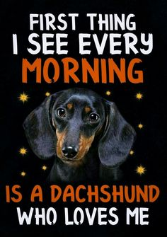 Dachshund Quotes, Dachshund Art, Daschund, Dachshund Puppies, Dachshunds, Weenie Dogs, Doggies, Therapy Dogs, Animals And Pets