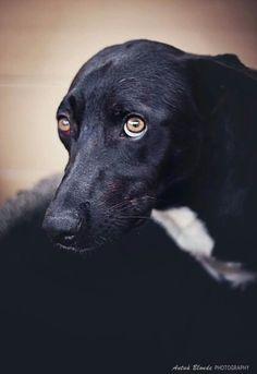 Tu miedo - antua blonde photography -  fotógrafo solidario - barcelona - animal - fotos - reportajes - animal de compañía - maresme - cat - gat - gato - dog - gos - perro