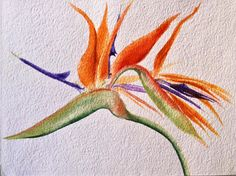 Paradise Flower, Strelicia, watercolour by Sanneke Griepink