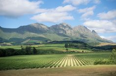 Repin if you love South African wine! BelAfrique your personal travel planner - www.BelAfrique.com