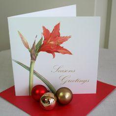 Christmas Card 'Amaryllis'. by TheBotanicalConcept on Etsy