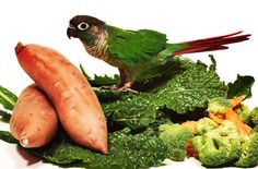 Encourage your picky parrot to eat a nutritious diet with these bird food tips.