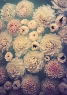 Beautiful blooms...