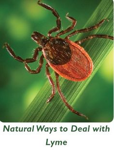 atural Cures for Lyme Disease    http://bxmiracle.com