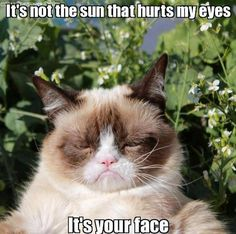 grumpy cat.. So true! Hows that song go? I'd wear my sunglasses at night?.. Pfft!