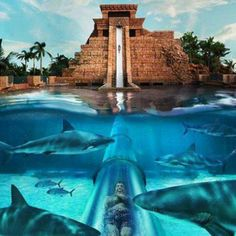 the water slide through the shark tank at the Atlantis hotel in Nassau, Bahamas! Imagine how terrifying this would be!!! #Norwegian #NCL