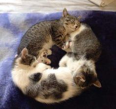 Bon milieu de nuit des chats 20 - chat Latte +