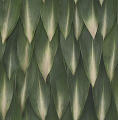 Leaves (SD101013) - Brewers Wallpapers - The unique vitality, rhythm, and texture of leaves produce a soothing, healing effect. Shown here in green. More colours available. Please request a sample for true colour match.