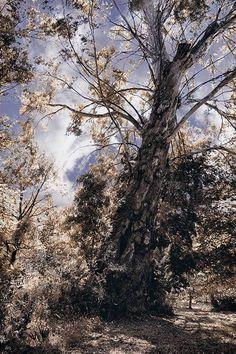 Tree #tree #nature