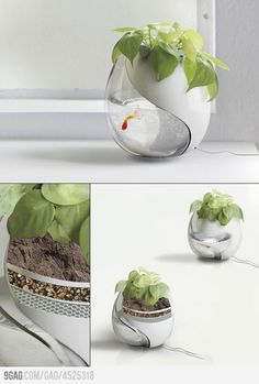 One Pot, Two Lives: a planter and a fishtank in one to promote a beautiful example of simbiotic living. While the fish's waste provides nutrients for the plant, the plant filters the water that it is fed to provide clean water for the fish. Aquarium Design, Aquarium Ideas, Ideias Diy, Cool Inventions, Deco Design, Design Design, Second Life, Sweet Home, Planters