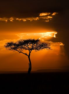 djferreira224:  Masai Mara sunset, Kenya