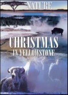 Christmas in Yellowstone (DVD) : Takes a look at animal life in Yellowstone National Park in the winter.