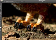 The recent release of Adobe Photoshop Creative Cloud (CC) 2014 (which is the 15th release of the product) got me thinking about my own workflow. Photoshop is an amazing piece of software. I have been using it commercially since version 5. However, I don't necessarily think the latest version is the best one. I've just …