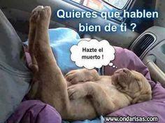 videoswatsapp.com imagenes chistosas videos graciosos memes risas gifs graciosos chistes divertidas humor http://ift.tt/2aVZL8F