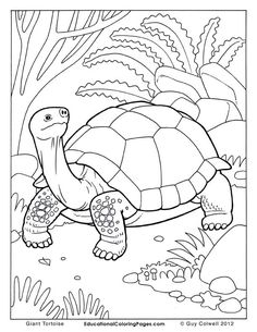 Color Book Printing | Animal Coloring Pages | Kids ...