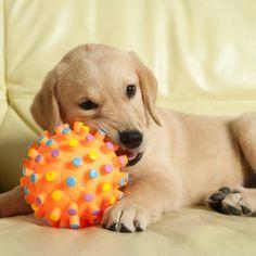 Como cuidar dos dentes do meu cachorro. Manter a higiene dental de seu cachorro é fundamental para evitar que a placa bacteriana danifique seus dentes e gere mau hálito. Não cuidar dos dentes de seu cachorro pode causar uma periodontite e i...