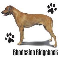 Rhodesian Ridgeback Dog HEAT PRESS TRANSFER for T Shirt Tote Sweatshirt 901b  #AB