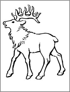Elk coloring page - Animals Town - animals color sheet - Elk printable coloring Disney Coloring Pages, Coloring Pages To Print, Coloring Sheets, Colorful Pictures, Beautiful Pictures, Bull Elk, Printable Animals, Craft Patterns, Printable Coloring