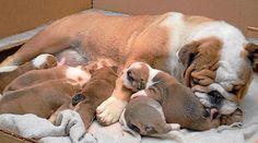 A pasar un día en familia, con la mujer más importante que existe, Feliz Día de las Madres les desea Doggy Dogs, Happy Mothers Day, Woman, Image Search, Pets, Animals, Mothers, Doggies, Pet Dogs