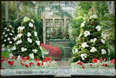 longwood gardens at christmas | The recently renovated Ballroom which houses the magnificent pipe ...