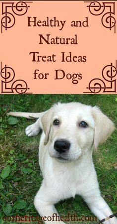 Healthy natural dog treat ideas | Our Heritage of Health