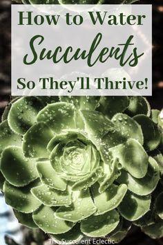 Succulent Potting Mix, Propagating Succulents, Succulent Gardening, Succulent Care, Succulents Garden, Garden Plants, Indoor Plants, House Plants, Succulent Planters