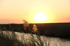 Golden Nature Photograph by May Photography - Taken in Holly Beach Louisiana