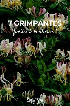 Balcony Flowers, Permaculture, Horticulture, Aloe Vera, Outdoor Gardens, Nature, Gardening, Garden, Hydrangeas