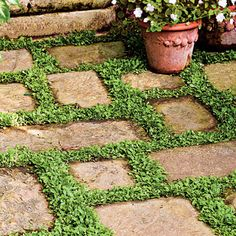 Live Carpet Low-creeping plants, such as mazus or dwarf mondo grass, look great planted between flagstones. They frame each stone in green.
