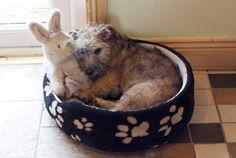 Puppy cuddling toy bunny