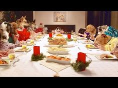 I can't explain why I love watching pets with human hands - I just do! Here we have 13 dogs and one cat sitting down to a family Christmas dinner. Does this remind you of your holiday feasts? Watch and enjoy this fun and cute video. Holiday Dinner, Holiday Parties, Dinner Parties, Cat Sitting Down, Cat Celebrating, Foto Blog, Le Diner, Dog Eating, Funny Dogs