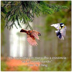 """Borboletas são tão belas!   : Tudo depende do seu olhar """"A Terra é linda. Se voc..."""