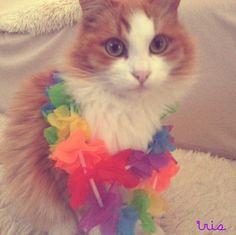 Hawaiian cat :)