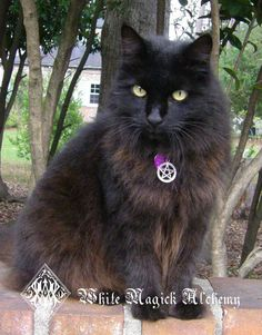 White Magick Alchemy - Witches Familiar Pentacle Cat Collar . Black, Purple or Red . Adjustable, $12.95 (http://www.whitemagickalchemy.com/witches-familiar-pentacle-cat-collar-black-purple-or-red-adjustable/)