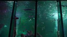Sealife Big Tank