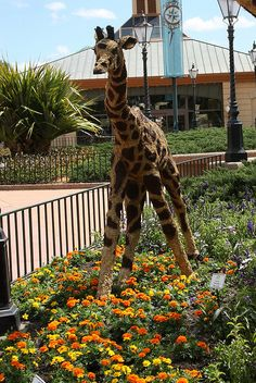 Close up of Awesome Giraffe Topiary in Epcot