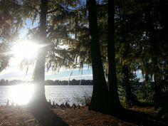 Along Lake Sue, Orlando / Winter Park, Florida. #Iluvwinterpark #LoveFL #winterparkfl #Orlando #orlandofl