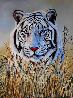 Tigre Blanc by Stefania Bellini