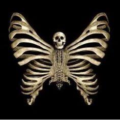Skull butterfly...