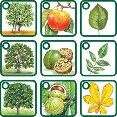 stromy, plody, listy