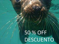 ECO FUN RENTAL anuncia paseo a la Isla San Jorge con 50% de descuento. Salida miércoles, 3 de septiembre.