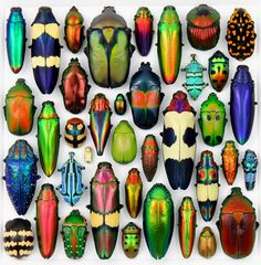 Beautiful beetles!