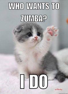 Zumba cute kitten who wants to Zumba I do Becky